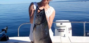 Another 40 Pound Chinook Salmon BC Image