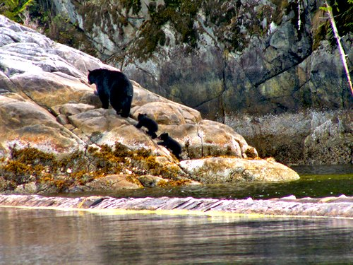 Critter Cove Bear Family Image