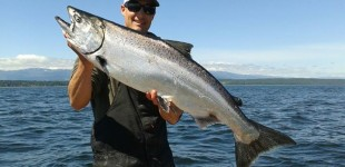 Caught a huge chinook in early June. Looks like 2013 will be a great salmon fishing year in Campbell River.